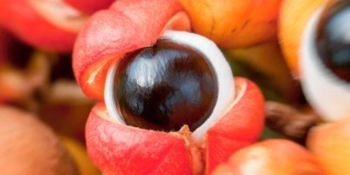 ultra-nutrients-guarana