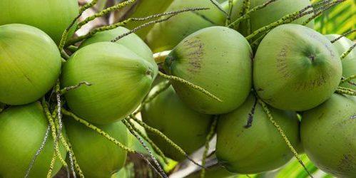 ultra-nutrients-virgin-kokosolie